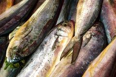 Lampuki Stock Images