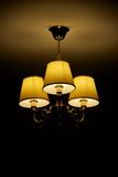 Lampy grono (portret) Fotografia Stock