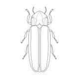 Lampyridae del escarabajo de la luciérnaga Bosquejo de la luciérnaga Imagenes de archivo