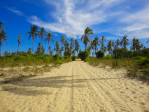 Lamu island in Kenya. Beach at Lamu island in Kenya royalty free stock photography