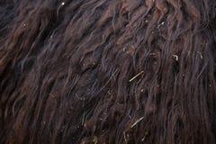 Lamy lama glama abstrakcjonistycznego tła zakończenia futerkowa tekstura futerkowy Obrazy Royalty Free