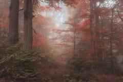 Lan alternativo surreal bonito da floresta de Autumn Fall da fantasia da cor imagens de stock royalty free