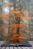 Lan alternativo surreal bonito da floresta de Autumn Fall da fantasia da cor fotos de stock