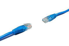 LAN Cable Royalty Free Stock Photo