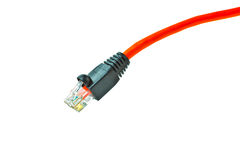 LAN ethernet cable isolated on white background Royalty Free Stock Photography