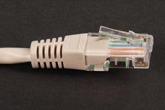 LAN-kabel och kontaktdon RJ45 Royaltyfria Foton