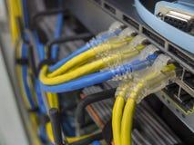 LAN-kabeln royaltyfri foto