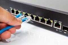 LAN-nätverksströmbrytare med Ethernetkablar som in pluggar Royaltyfri Bild