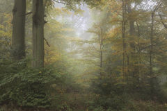 Lan nebbiosa evocativa vibrante variopinta sbalorditiva della foresta di Autumn Fall Immagine Stock Libera da Diritti