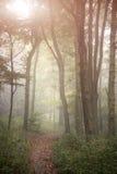 Lan nebbiosa evocativa vibrante variopinta sbalorditiva della foresta di Autumn Fall Fotografia Stock
