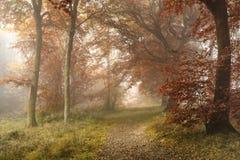 Lan nebbiosa evocativa vibrante variopinta sbalorditiva della foresta di Autumn Fall Immagini Stock
