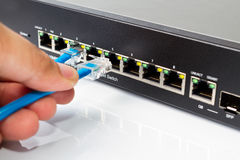 LAN network switch with ethernet cables plugging in Royalty Free Stock Image