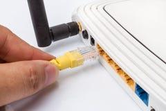 Lan-Netzschalter mit den Ethernet-Kabeln, die herein auf Weiß verstopfen Lizenzfreies Stockfoto