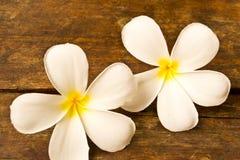 Lan Thom bloemen Royalty-vrije Stock Fotografie