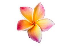 Lan thom flower. On white background Stock Photo