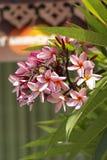 Lan thom flower. Beautiful orange flower in thailand, Lan thom flower Stock Photo