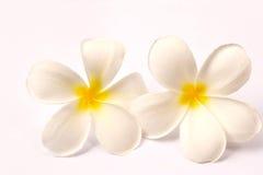 Lan Thom Flowers. On white background Stock Photos
