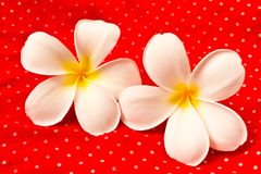 Lan Thom Flowers. On red background Royalty Free Stock Photo