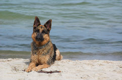 Dog by water Stock Photos