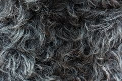 Lana del ` s delle pecore Fotografie Stock