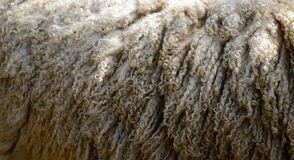 Lana delle pecore Fotografie Stock
