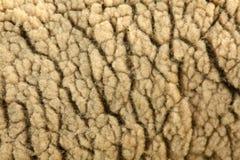 Lanas de las ovejas Foto de archivo libre de regalías