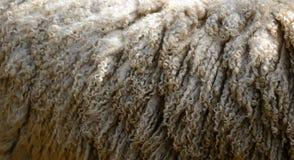 Lanas de las ovejas Fotos de archivo