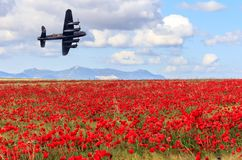Free Lancaster Bomber Passing Over A Field Of Poppies Stock Image - 128833481