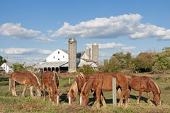 Lancaster County Amish Farm Stock Photos