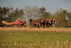 Lancaster County, PA: Женщина Амишей с командой лошади Стоковая Фотография