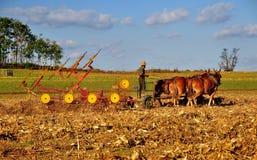 Lancaster County, PA: Поле фермера Амишей паша Стоковая Фотография RF