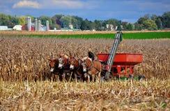 Lancaster County PA: Amish bonde i fält Arkivbild