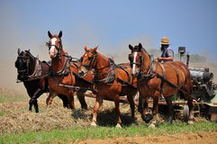 Lancaster County, PA: Amish Farmer Plowing Field Royalty Free Stock Image
