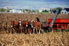 Lancaster County, PA: Amish Farmer with Thresher Royalty Free Stock Photos