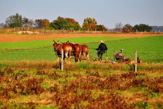 Lancaster County, PA: Amish Farmer Tilling Field Royalty Free Stock Photo