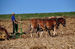 Lancaster County, PA: Amish Farmer Tilling Field Royalty Free Stock Images