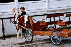 Lancaster County, PA: Amish Girl with Pony Cart Royalty Free Stock Photography