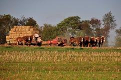 Lancaster County PA: Amish som gör Hay Bales arkivbild