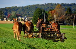 Lancaster County PA: Amish ungdom som arbetar på lantgård royaltyfri foto