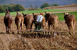 Lancaster County, PA: Amish Youth Plowing Field Royalty Free Stock Photography