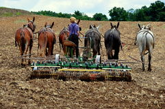 Lancaster County, PA: Amish Youth Plowing Field Royalty Free Stock Images