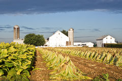 Lancaster County Tobacco Farm Stock Photography