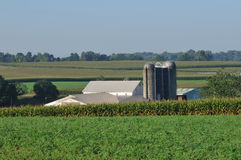 Lancaster farm with silo and corn fields royalty free stock images