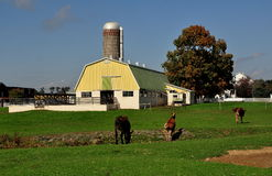 Lancaster PA: Åsnor på en Amish lantgård royaltyfri fotografi