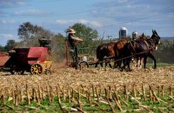 Lancaster, PA: Amish Farmer with Donkeys Royalty Free Stock Photo
