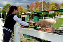 Lancaster, PA: Woman Feeding Goat Stock Images