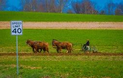 LANCASTER, U.S.A. - 18 APRILE, 2018: Agricoltore di Amish che usando i cavalli per legare l'aratro antico nel campo, producono il Fotografie Stock Libere da Diritti