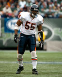 Lance Briggs, Chicago Bears Stock Afbeeldingen