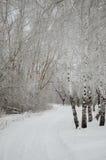 Lance da aleia do inverno a floresta Imagens de Stock Royalty Free