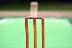 Lancement de cricket photo libre de droits